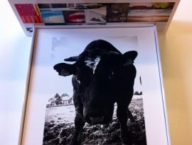 PIM WAS HERE – fotoboeken Pim Vuik met gesigneerde foto's